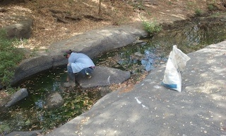 Gran Pacifica Clean Up San Diego River, individual cleaning in river.jpg