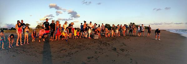 Turtle release group