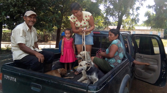 family and dogs going home, after the operations